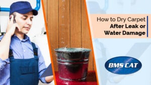how to dry carpet after water damage