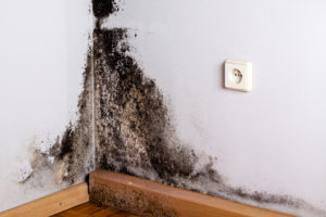 Black mold on the wall