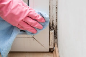 tips to prevent mold growth