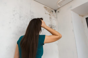 Guide to Preventing Mold In Your Home